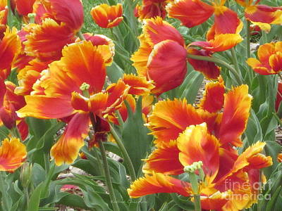 Photograph - Parrot Tulips by Kathie Chicoine