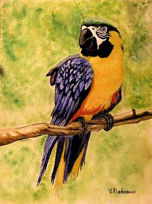 Painting - Parrot by Victoria Rhodehouse
