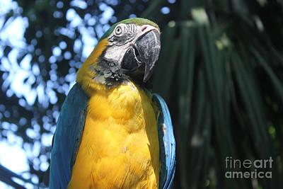 Photograph - Parrot by Wilko Van de Kamp
