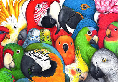 Whimsical Wildlife Drawing - Parrotheads by Don McMahon