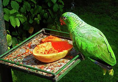 Photograph - Parrots 4 by Ron Kandt