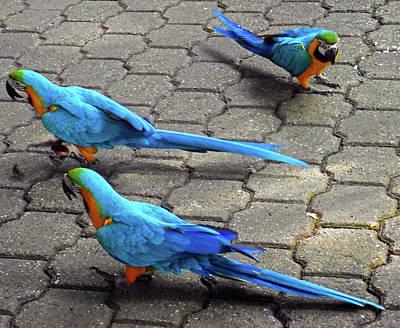 Photograph - Parrots 5 by Ron Kandt