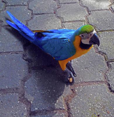 Photograph - Parrots 6 by Ron Kandt