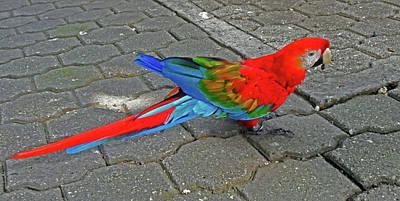 Photograph - Parrots 8 by Ron Kandt