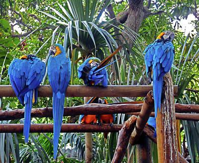 Photograph - Parrots 9 by Ron Kandt