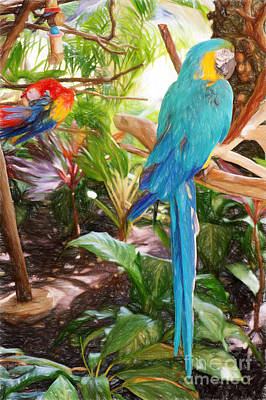Photograph - Parrots In Paradise by Sue Melvin