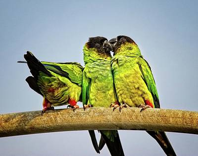 Photograph - Parrots In South Florida by Ronald Lutz