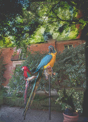 Photograph - Parrots In The Garden by Patricia Dennis