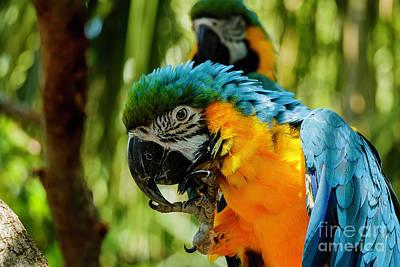 Photograph - Parrots by Les Greenwood