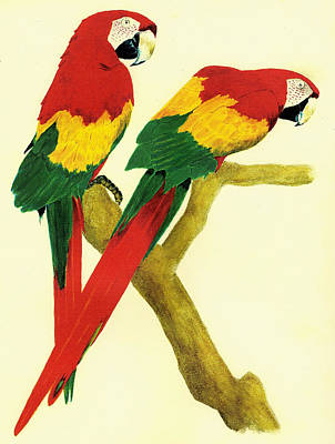 1-war Is Hell Royalty Free Images - Parrots Royalty-Free Image by Michael Vigliotti