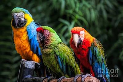 Photograph - Parrots by Paulette Thomas