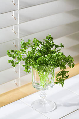 Photograph - Parsley Bouquet by Diane Macdonald