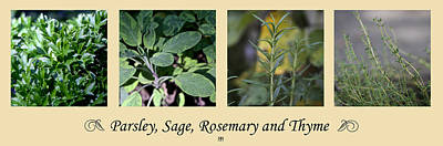 Photograph - Parsley Sage Rosemary And Thyme by John Meader