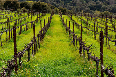 Photograph - Parsonage Vineyard by Derek Dean