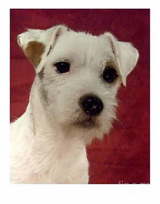 Terrier Digital Art - Parsons Russell Terrier - Jack Russell 285 by Larry Matthews