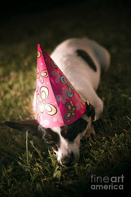 Photograph - Partied Out Party Animal by Jorgo Photography - Wall Art Gallery