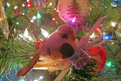 Photograph - Partridge In A Christmas Tree  by Jennifer Wheatley Wolf