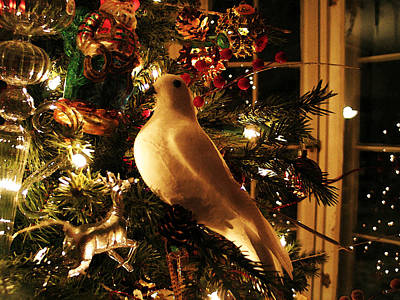 Photograph - Partridge On A Christmas Tree by Susan Vineyard