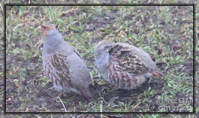 Digital Art - Partridges by Donna Munro