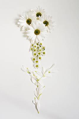 Photograph - Parts Of A Daisy  by Di Kerpan