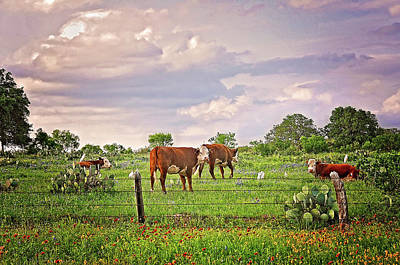 Photograph - Party In The Pasture by Lynn Bauer