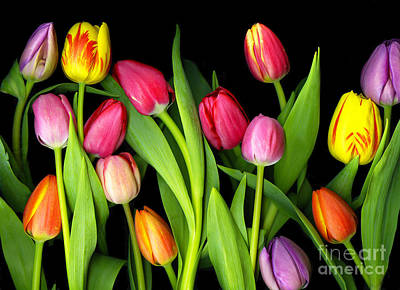 Photograph - Tulips by Christian Slanec