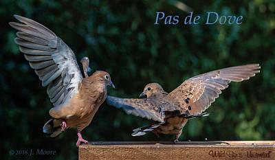 Photograph - Pas De Dove by Jim Moore
