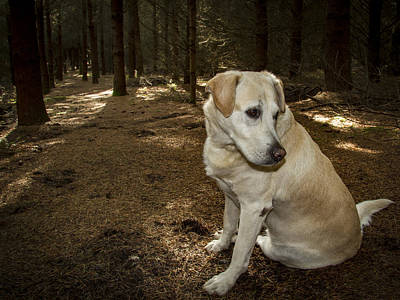Photograph - Pasha In The Woods by Jean Noren