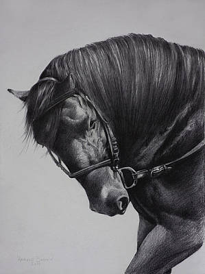 Drawing - Paso Fino by Harvie Brown