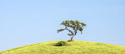 Photograph - Paso Robles - Solitary Valley Oak by Alexander Kunz