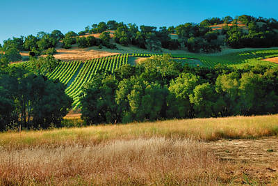 Pastoral Vineyard Photograph - Paso Robles Vineyard by Steven Ainsworth