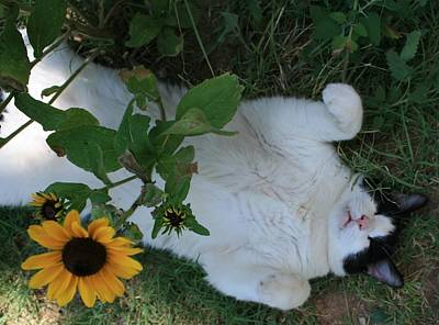 Art Print featuring the photograph Passed Out Under The Daisies by Marna Edwards Flavell