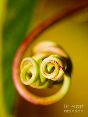Photograph - Passiflora Closeup by Nick  Biemans