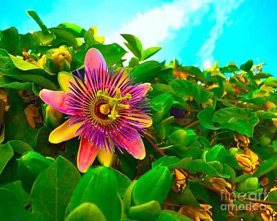 Passiflora Photograph - Passiflora by Wonju H