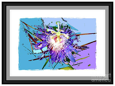 Photograph - Passion Flower Debut by Shirley Moravec
