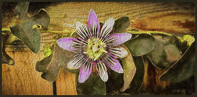 Passion Flower Art Print by Kenneth Roberts