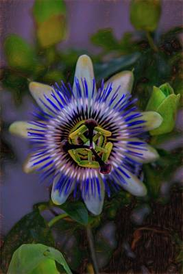 Photograph - Passion Flower by Patricia Dennis