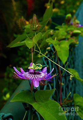 Photograph - Passion Flower Portrait by Craig Wood