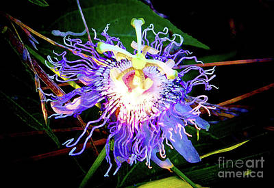 Photograph - Passion Flower Profile by Shirley Moravec