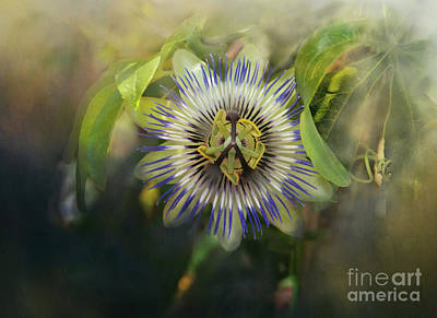 Digital Art - Passion Flower by Victoria Harrington