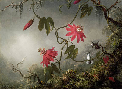 Hummingbird Painting - Passion Flowers And Hummingbird by Martin Johnson Heade