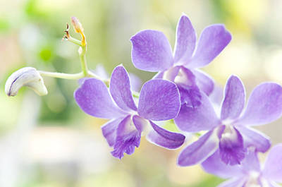 Passion For Flowers. Purple Orchids Art Print by Jenny Rainbow