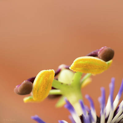 Photograph - Passion For Macro Two by Wim Lanclus