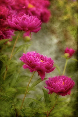Photograph - Passion For Pink by Robin Webster