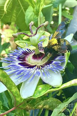 Photograph - Passion Fruit Flower With Bee by Janette Boyd