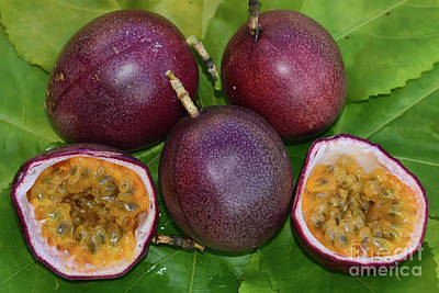 Photograph - Passion Fruit Harvest by Olga Hamilton