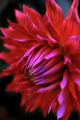 Macro Digital Art - Passion by Jessica Jenney