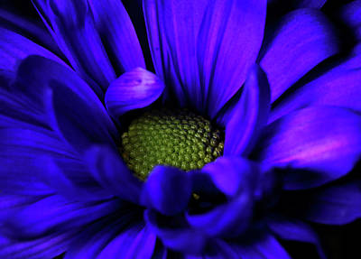 Photograph - Passion by Judy Vincent