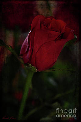 Photograph - Passion by Linda Lees