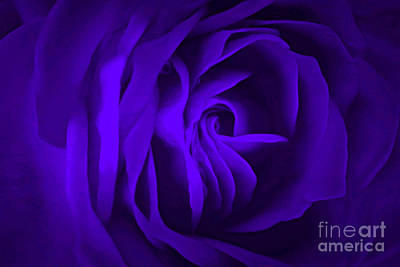Photograph - Passion Purple by Krissy Katsimbras